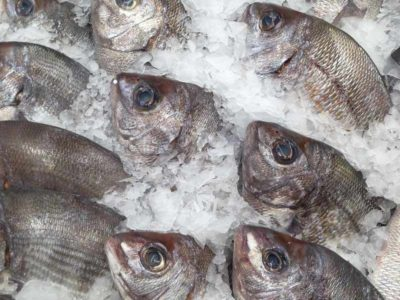 Frozen Sea Bream