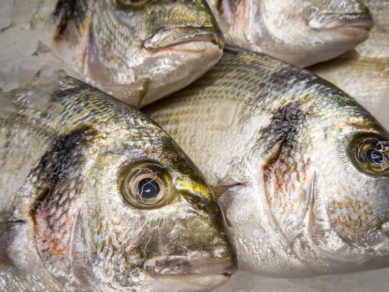 Sea Bream Sale